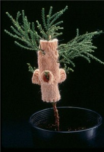 Giant-sequoia wearing a sweater